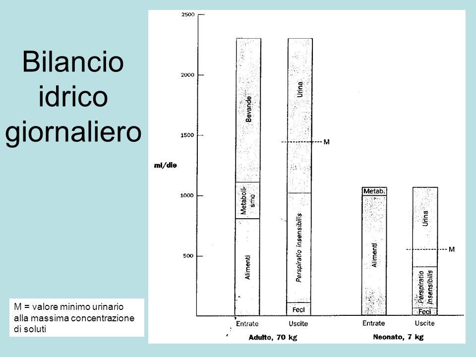 Bilancio idrico giornaliero M = valore minimo urinario alla massima concentrazione di soluti