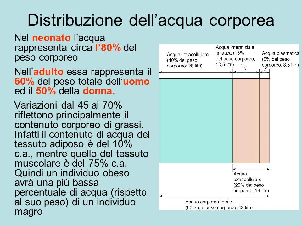 Distribuzione dellacqua corporea Nel neonato lacqua rappresenta circa l80% del peso corporeo Nelladulto essa rappresenta il 60% del peso totale delluomo ed il 50% della donna.