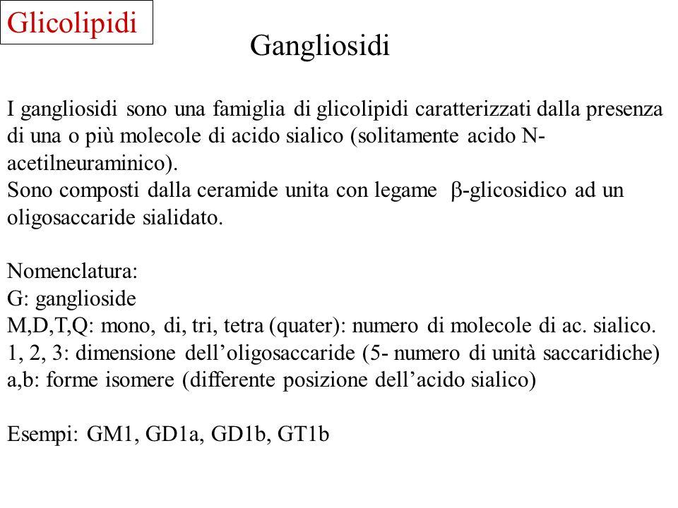 Glicolipidi Gangliosidi I gangliosidi sono una famiglia di glicolipidi caratterizzati dalla presenza di una o più molecole di acido sialico (solitamen
