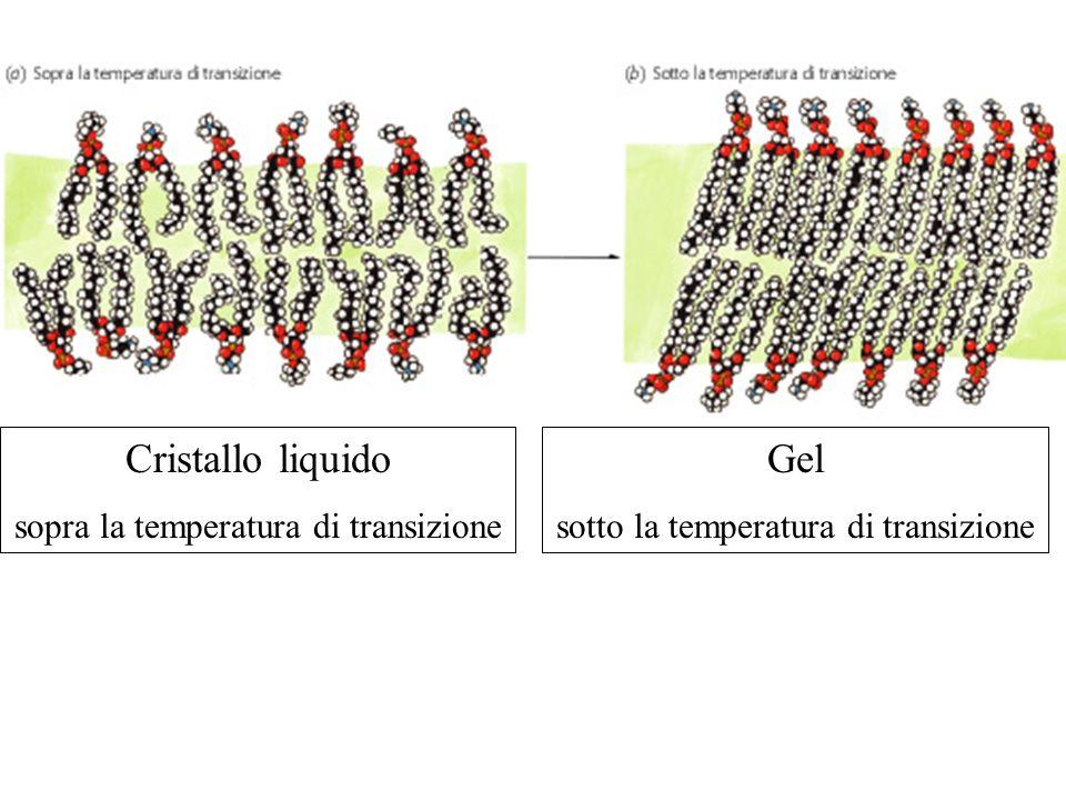 Cristallo liquido sopra la temperatura di transizione Gel sotto la temperatura di transizione