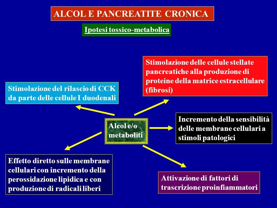 ALCOL E PANCREATITE CRONICA Ipotesi tossico-metabolica Alcol e/o metaboliti Effetto diretto sulle membrane cellulari con incremento della perossidazio