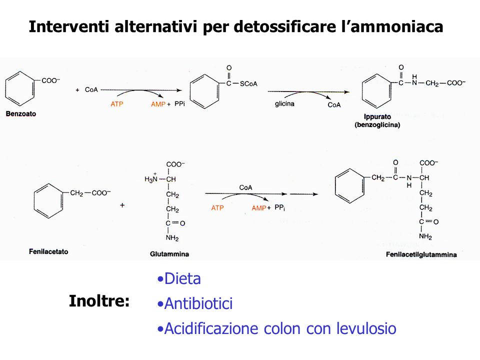 Interventi alternativi per detossificare lammoniaca Dieta Antibiotici Acidificazione colon con levulosio Inoltre: