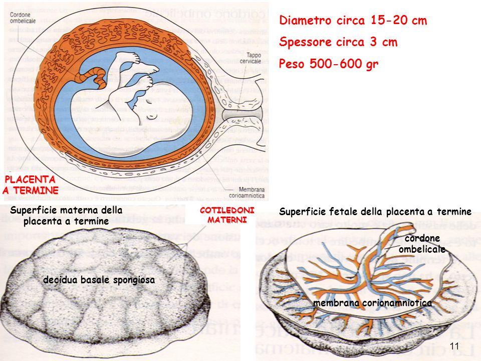 Diametro circa 15-20 cm Spessore circa 3 cm Peso 500-600 gr Superficie materna della placenta a termine COTILEDONI MATERNI decidua basale spongiosa Su