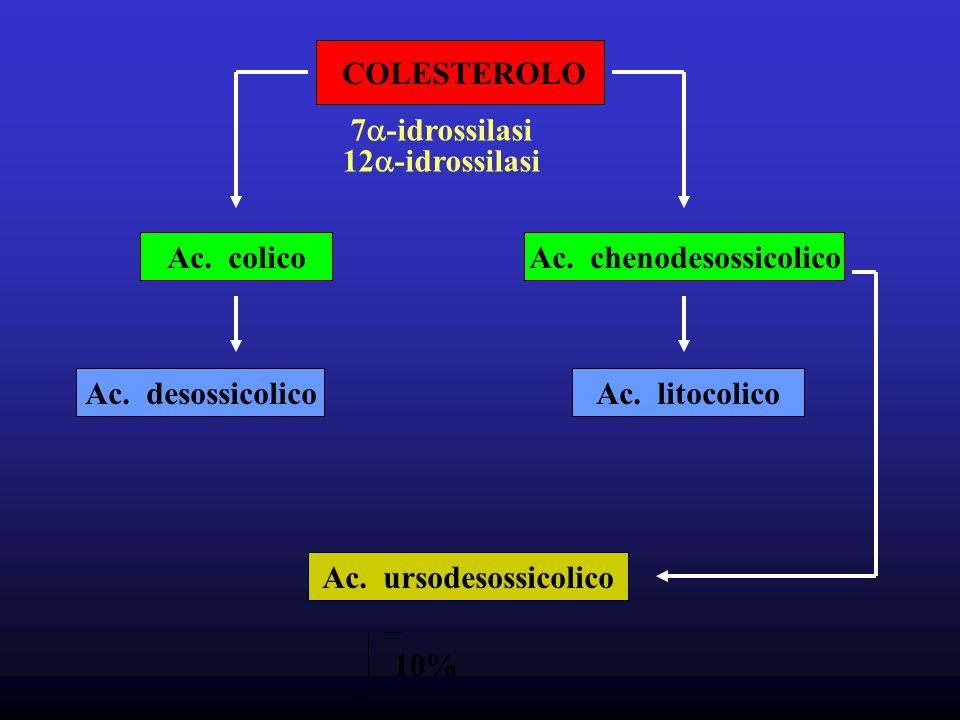 COLESTEROLO Ac.colicoAc. chenodesossicolico Ac. desossicolicoAc.