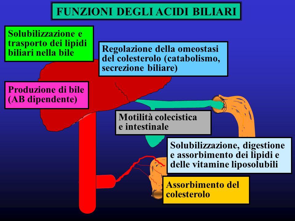Regolazione della omeostasi del colesterolo (catabolismo, secrezione biliare) Solubilizzazione e trasporto dei lipidi biliari nella bile Produzione di bile (AB dipendente) Solubilizzazione, digestione e assorbimento dei lipidi e delle vitamine liposolubili Assorbimento del colesterolo Motilità colecistica e intestinale FUNZIONI DEGLI ACIDI BILIARI