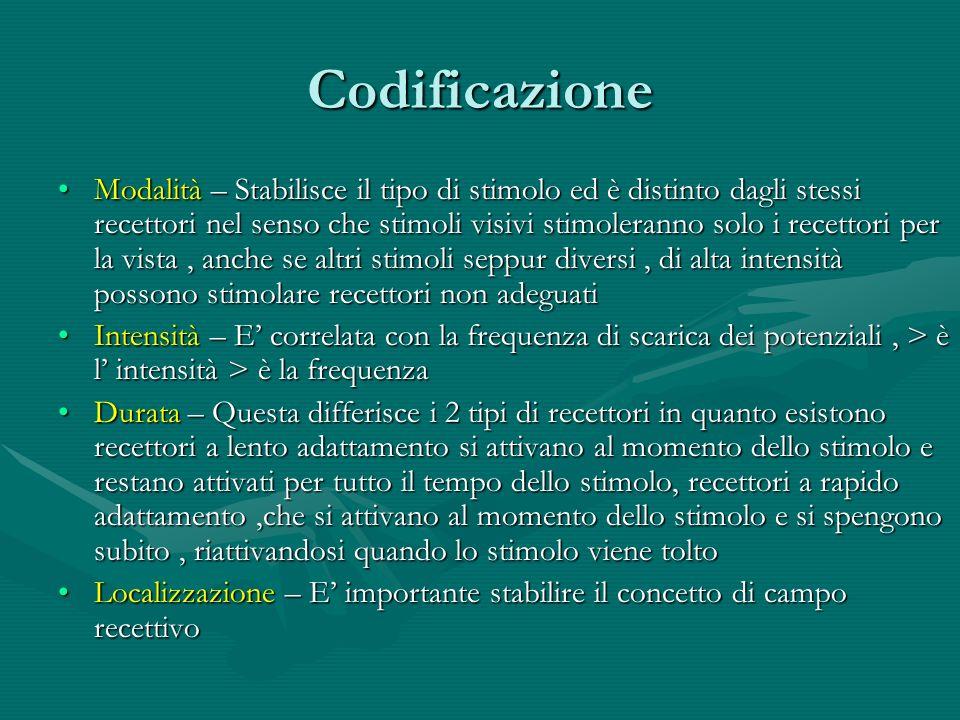 Codificazione Modalità – Stabilisce il tipo di stimolo ed è distinto dagli stessi recettori nel senso che stimoli visivi stimoleranno solo i recettori