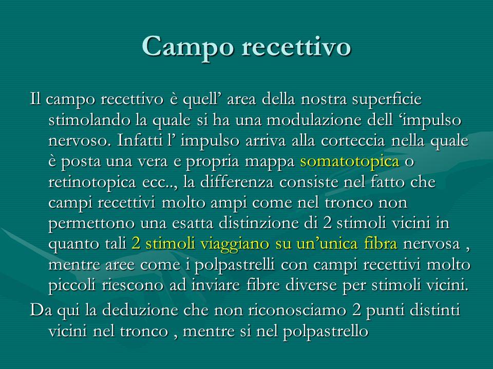 Campo recettivo Il campo recettivo è quell area della nostra superficie stimolando la quale si ha una modulazione dell impulso nervoso. Infatti l impu