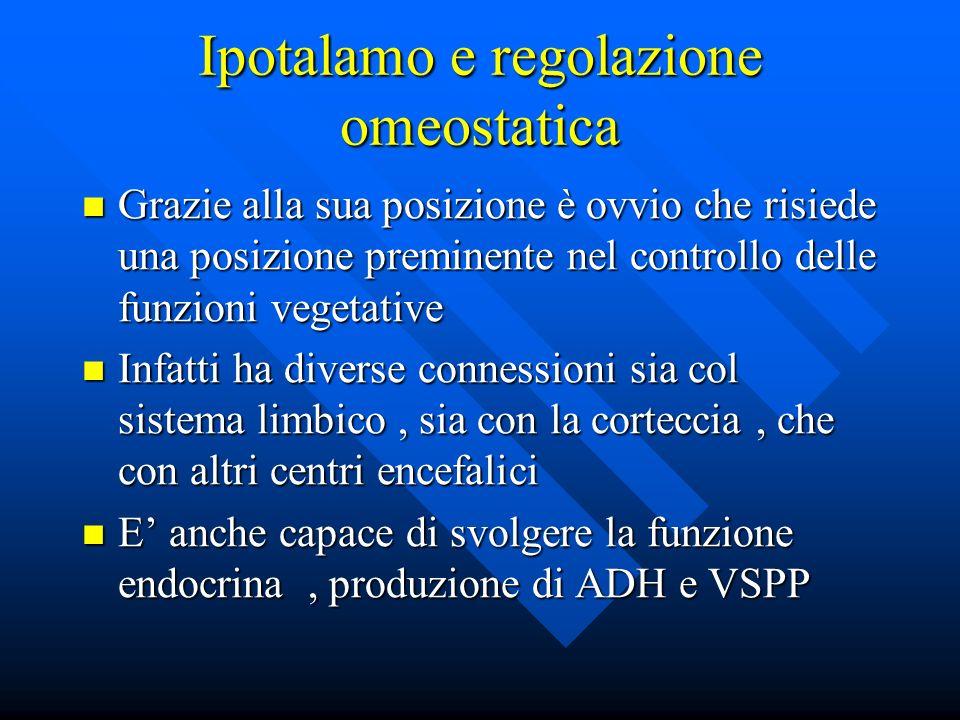 Ipotalamo e regolazione omeostatica Grazie alla sua posizione è ovvio che risiede una posizione preminente nel controllo delle funzioni vegetative Gra