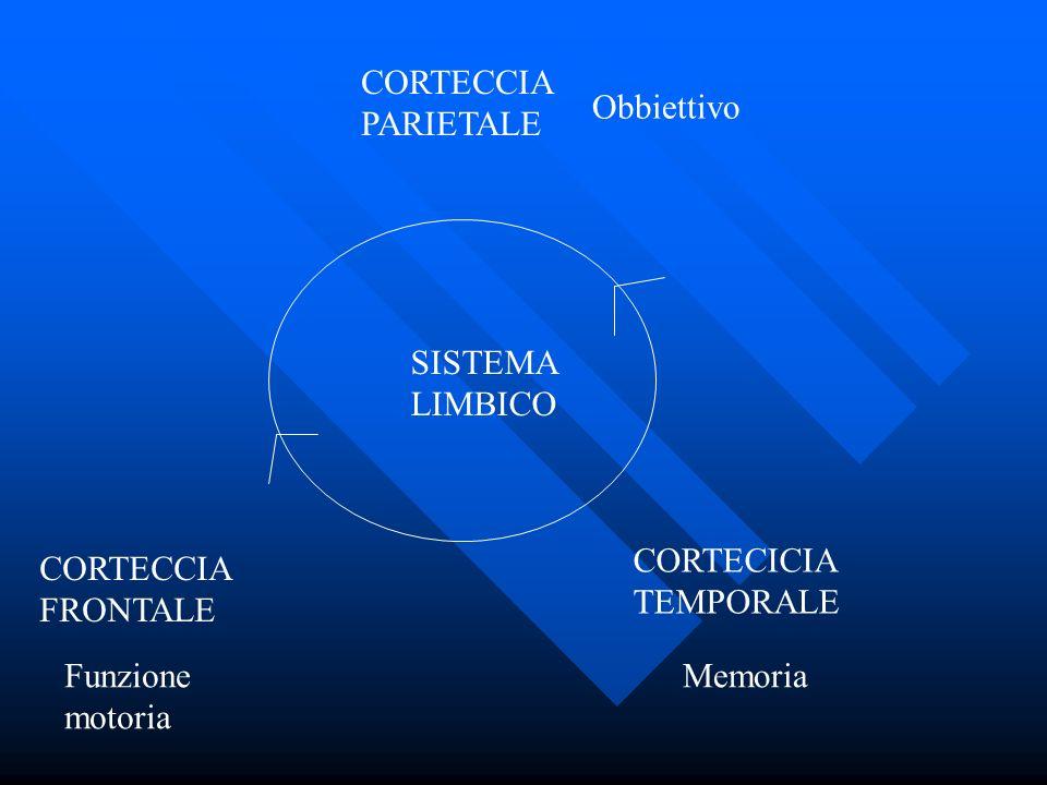 SISTEMA LIMBICO CORTECCIA FRONTALE CORTECICIA TEMPORALE CORTECCIA PARIETALE Obbiettivo Funzione motoria Memoria