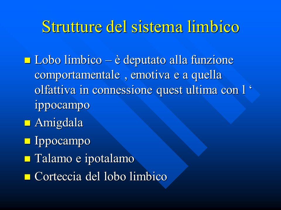 Strutture del sistema limbico Lobo limbico – è deputato alla funzione comportamentale, emotiva e a quella olfattiva in connessione quest ultima con l