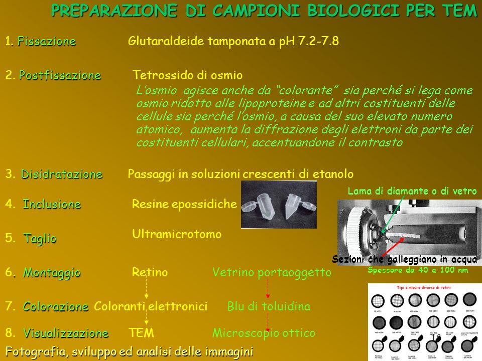 PREPARAZIONE DI CAMPIONI BIOLOGICI PER TEM. Fissazione 1. Fissazione Glutaraldeide tamponata a pH 7.2-7.8 Postfissazione 2. Postfissazione Tetrossido