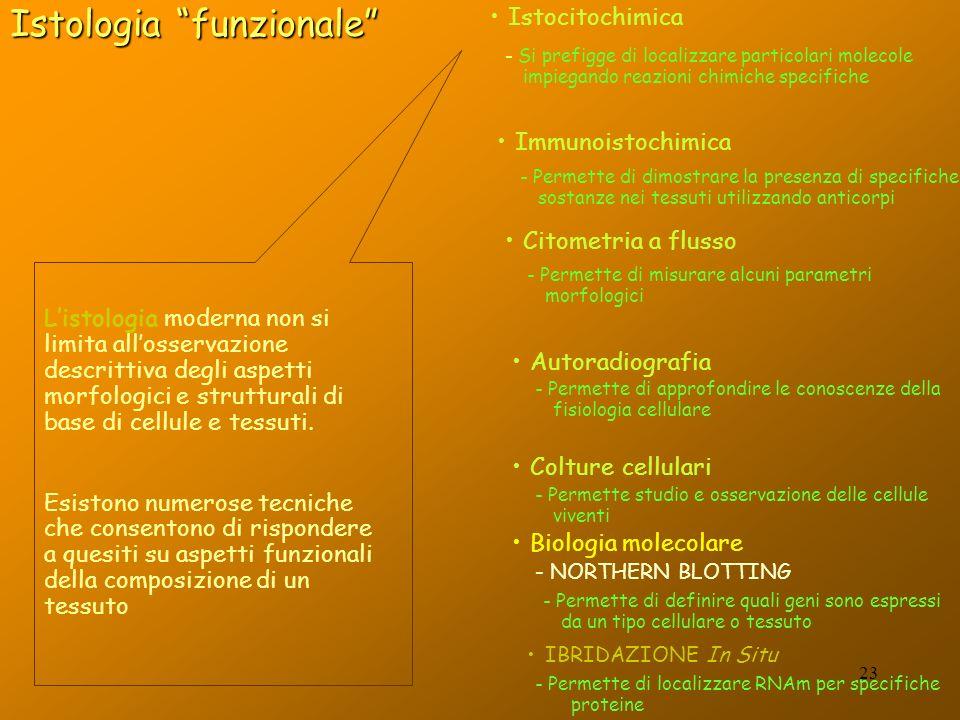 Listologia moderna non si limita allosservazione descrittiva degli aspetti morfologici e strutturali di base di cellule e tessuti. Esistono numerose t