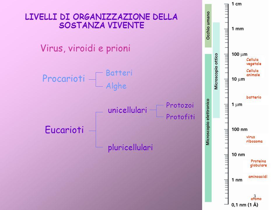LIVELLI DI ORGANIZZAZIONE DELLA SOSTANZA VIVENTE Virus, viroidi e prioni Procarioti Eucarioti pluricellulari Batteri Alghe unicellulari Protozoi Proto