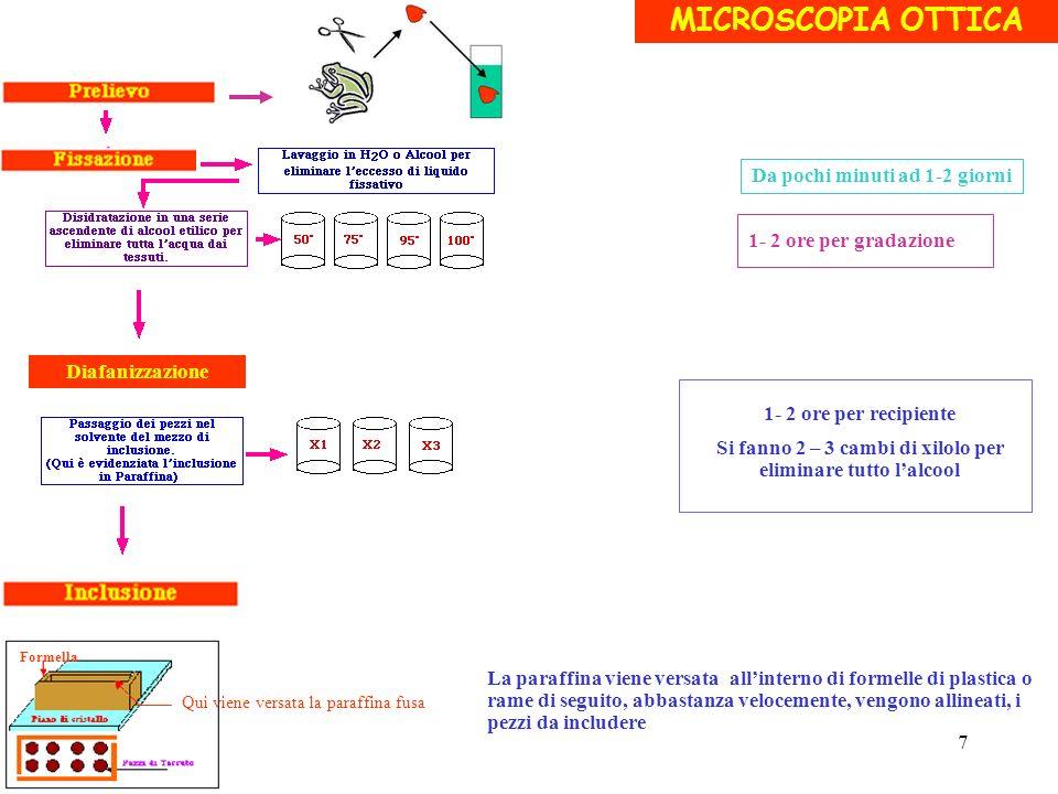MICROSCOPIA OTTICA 1- 2 ore per gradazione 1- 2 ore per recipiente Si fanno 2 – 3 cambi di xilolo per eliminare tutto lalcool Da pochi minuti ad 1-2 g