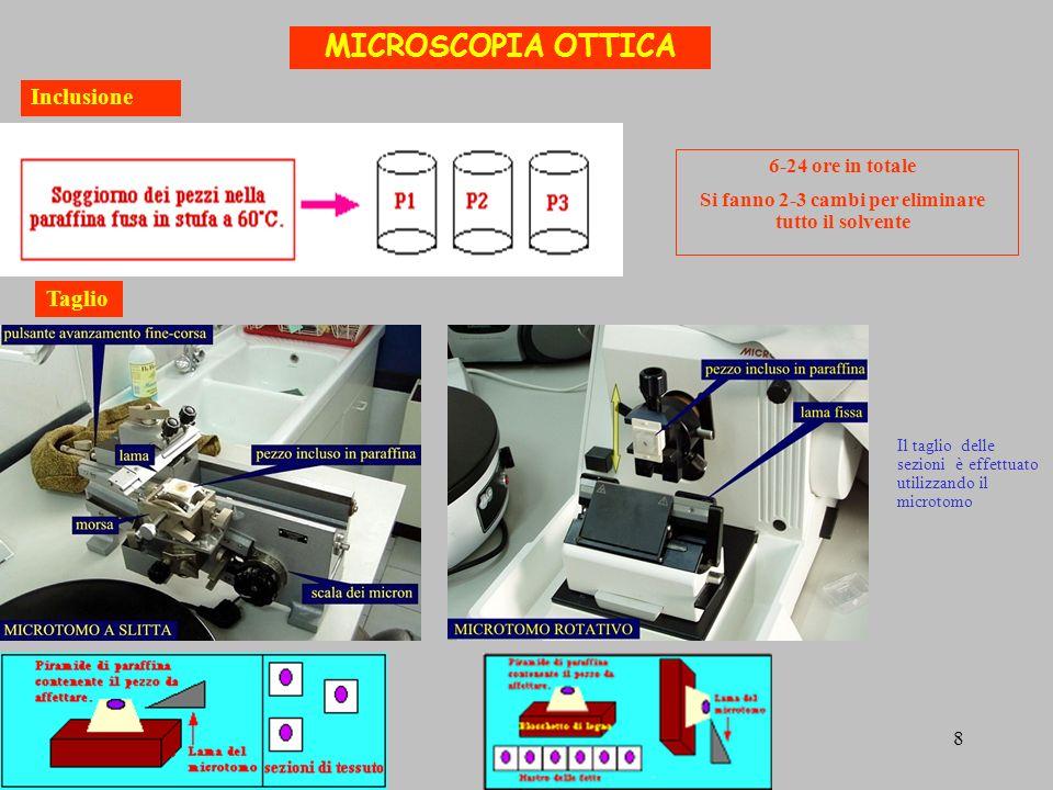 MICROSCOPIA OTTICA Inclusione Taglio Il taglio delle sezioni è effettuato utilizzando il microtomo 6-24 ore in totale Si fanno 2-3 cambi per eliminare