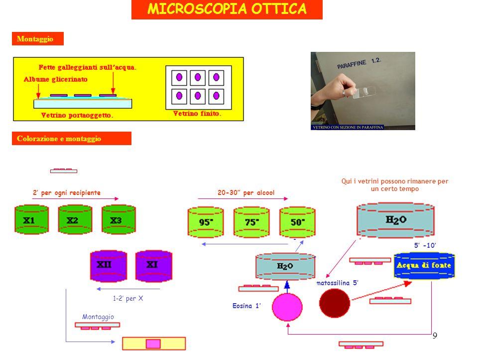 MICROSCOPIA OTTICA Montaggio Colorazione e montaggio 2 per ogni recipiente20-30 per alcool Qui i vetrini possono rimanere per un certo tempo Ematossil