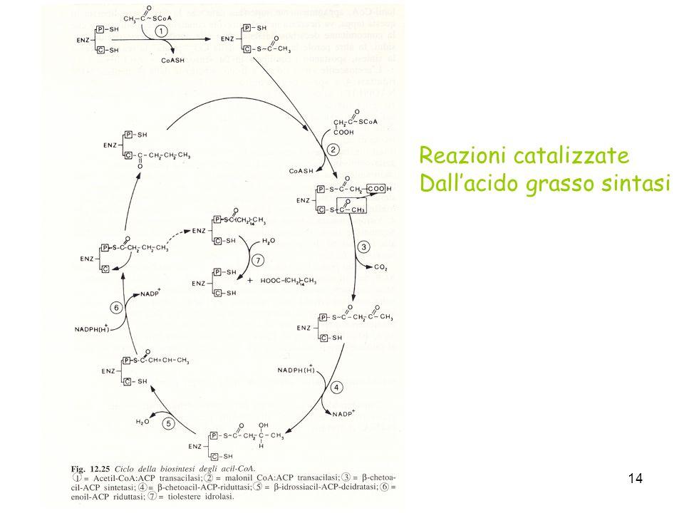14 Reazioni catalizzate Dallacido grasso sintasi