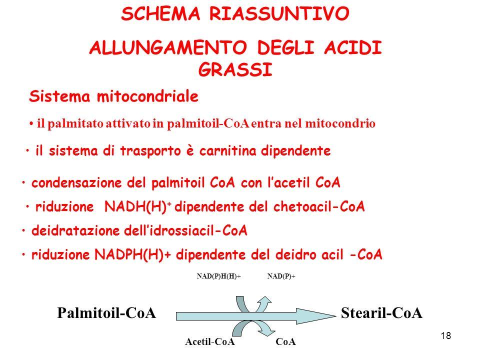 18 SCHEMA RIASSUNTIVO ALLUNGAMENTO DEGLI ACIDI GRASSI Sistema mitocondriale il palmitato attivato in palmitoil-CoA entra nel mitocondrio il sistema di trasporto è carnitina dipendente condensazione del palmitoil CoA con lacetil CoA riduzione NADH(H) + dipendente del chetoacil-CoA deidratazione dellidrossiacil-CoA riduzione NADPH(H)+ dipendente del deidro acil -CoA Palmitoil-CoAStearil-CoA NAD(P)H(H)+ NAD(P)+ Acetil-CoA CoA
