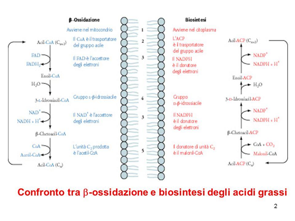 2 Confronto tra -ossidazione e biosintesi degli acidi grassi