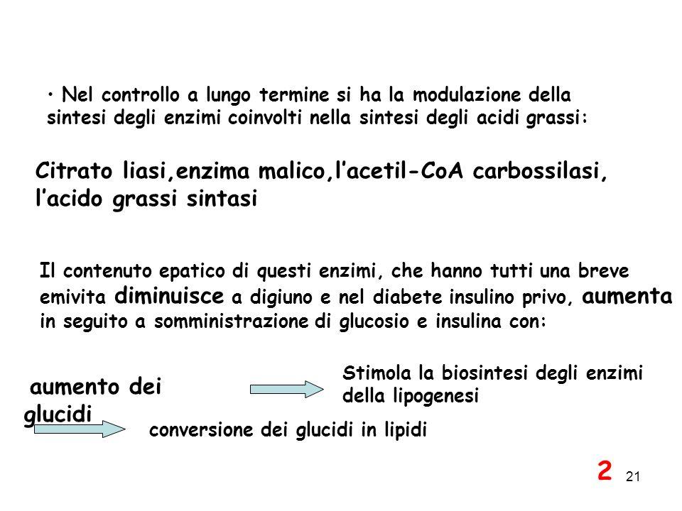 21 Nel controllo a lungo termine si ha la modulazione della sintesi degli enzimi coinvolti nella sintesi degli acidi grassi: Citrato liasi,enzima malico,lacetil-CoA carbossilasi, lacido grassi sintasi Il contenuto epatico di questi enzimi, che hanno tutti una breve emivita diminuisce a digiuno e nel diabete insulino privo, aumenta in seguito a somministrazione di glucosio e insulina con: aumento dei glucidi Stimola la biosintesi degli enzimi della lipogenesi conversione dei glucidi in lipidi 2