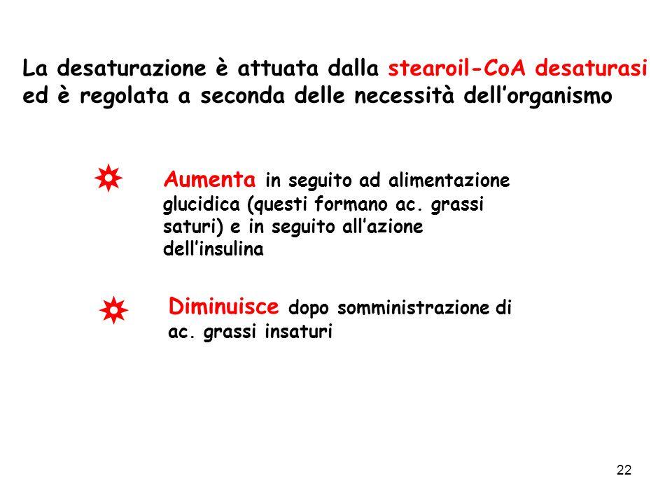 22 La desaturazione è attuata dalla stearoil-CoA desaturasi ed è regolata a seconda delle necessità dellorganismo Aumenta in seguito ad alimentazione glucidica (questi formano ac.