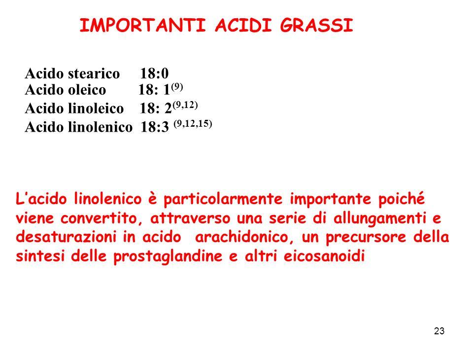 23 IMPORTANTI ACIDI GRASSI Acido stearico 18:0 Acido linoleico 18: 2 (9,12) Acido oleico 18: 1 (9) Acido linolenico 18:3 (9,12,15) Lacido linolenico è particolarmente importante poiché viene convertito, attraverso una serie di allungamenti e desaturazioni in acido arachidonico, un precursore della sintesi delle prostaglandine e altri eicosanoidi