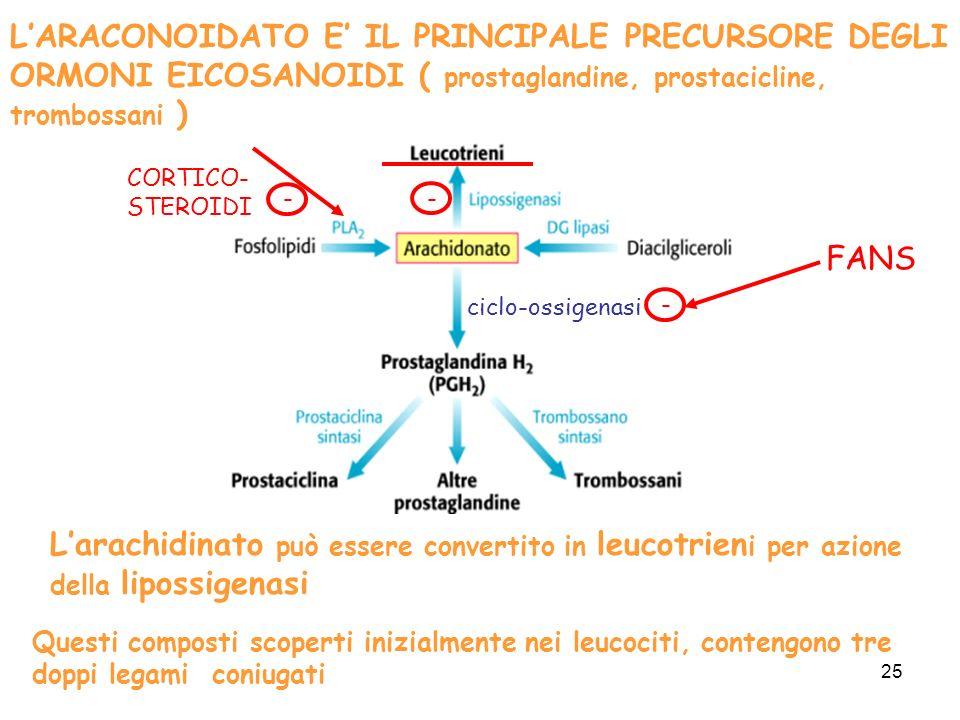 25 LARACONOIDATO E IL PRINCIPALE PRECURSORE DEGLI ORMONI EICOSANOIDI ( prostaglandine, prostacicline, trombossani ) Larachidinato può essere convertito in leucotrien i per azione della lipossigenasi Questi composti scoperti inizialmente nei leucociti, contengono tre doppi legami coniugati ciclo-ossigenasi FANS - CORTICO- STEROIDI - -
