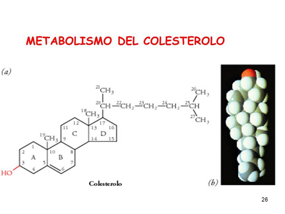 26 METABOLISMO DEL COLESTEROLO