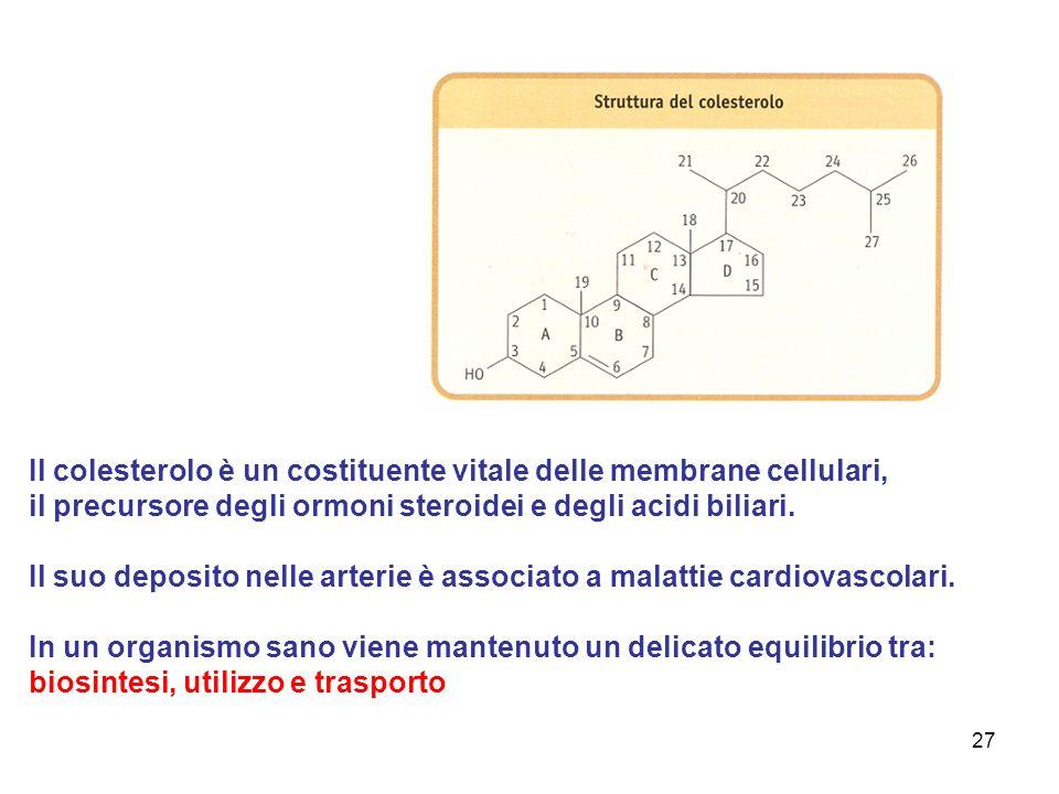 27 Il colesterolo è un costituente vitale delle membrane cellulari, il precursore degli ormoni steroidei e degli acidi biliari.