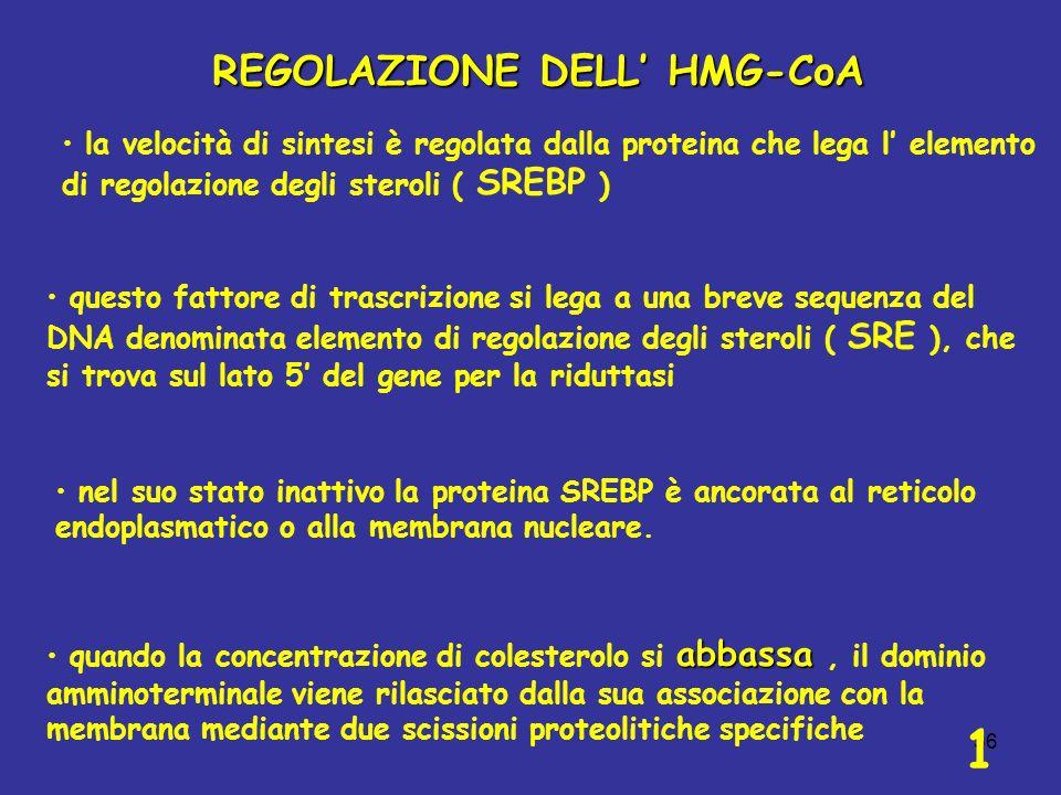 36 REGOLAZIONE DELL HMG-CoA la velocità di sintesi è regolata dalla proteina che lega l elemento di regolazione degli steroli ( SREBP ) questo fattore di trascrizione si lega a una breve sequenza del DNA denominata elemento di regolazione degli steroli ( SRE ), che si trova sul lato 5 del gene per la riduttasi nel suo stato inattivo la proteina SREBP è ancorata al reticolo endoplasmatico o alla membrana nucleare.
