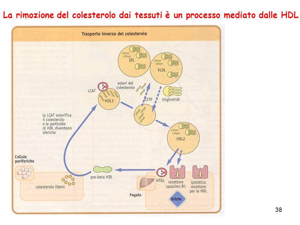 38 La rimozione del colesterolo dai tessuti è un processo mediato dalle HDL