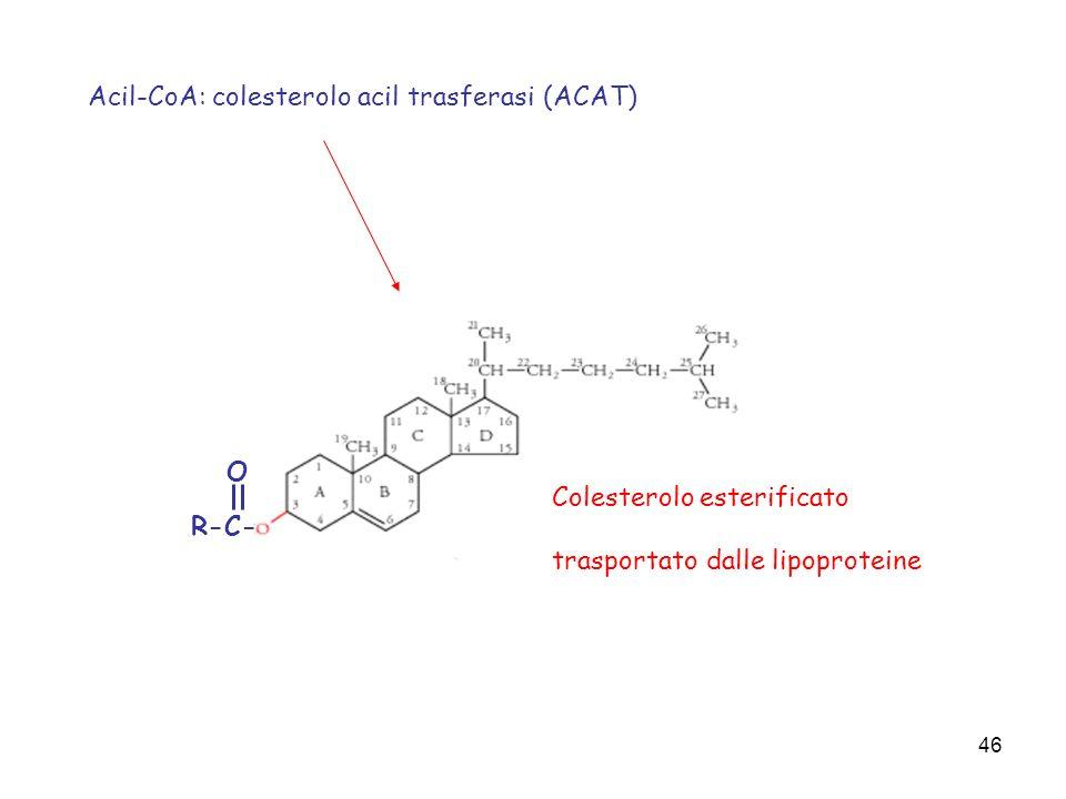 46 R-C- O Colesterolo esterificato trasportato dalle lipoproteine Acil-CoA: colesterolo acil trasferasi (ACAT)