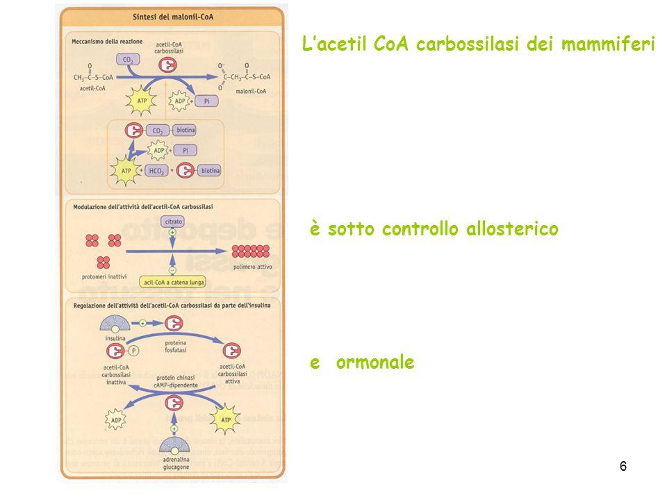 6 Lacetil CoA carbossilasi dei mammiferi è sotto controllo allosterico e ormonale