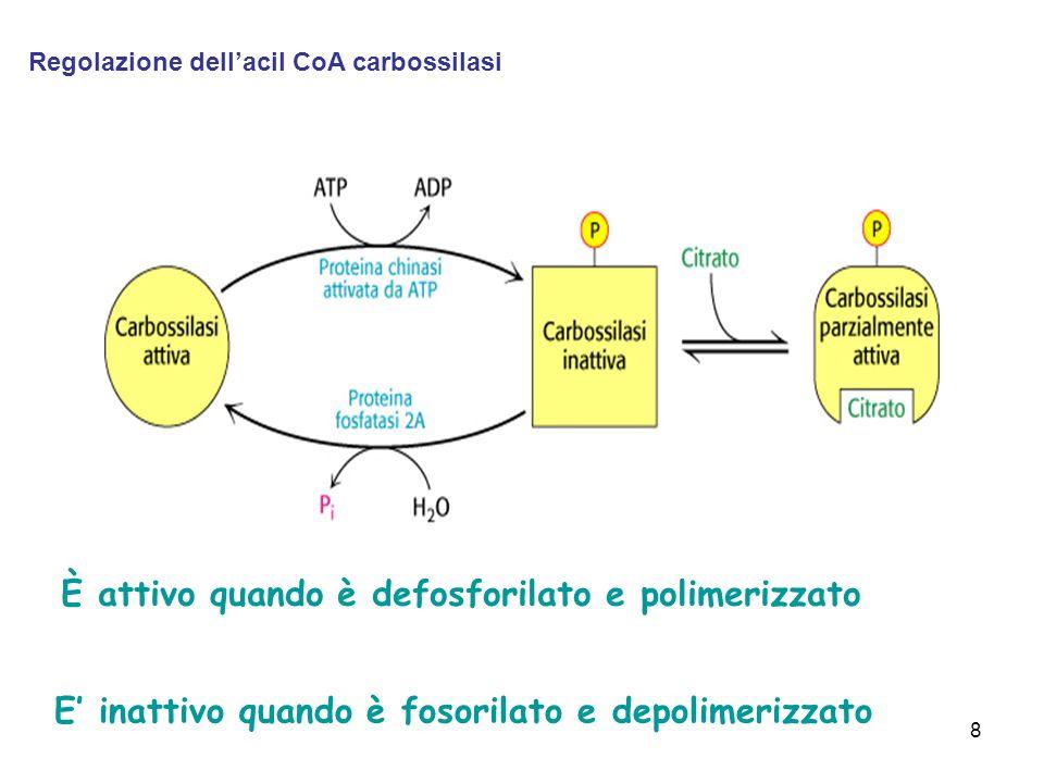 8 È attivo quando è defosforilato e polimerizzato E inattivo quando è fosorilato e depolimerizzato Regolazione dellacil CoA carbossilasi