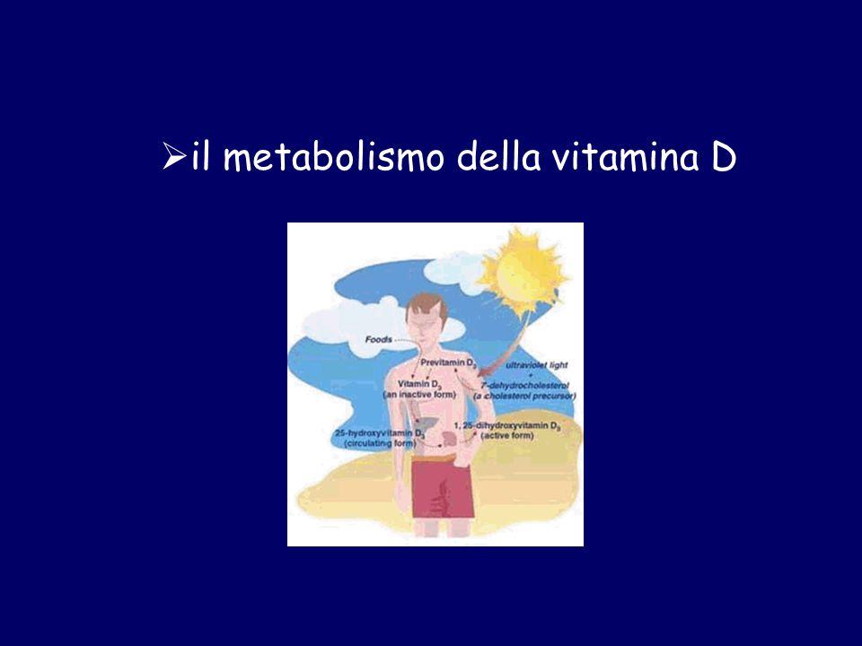 il metabolismo della vitamina D