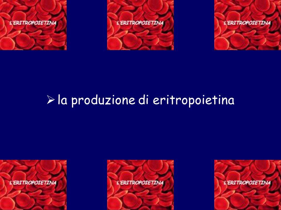 la produzione di eritropoietina