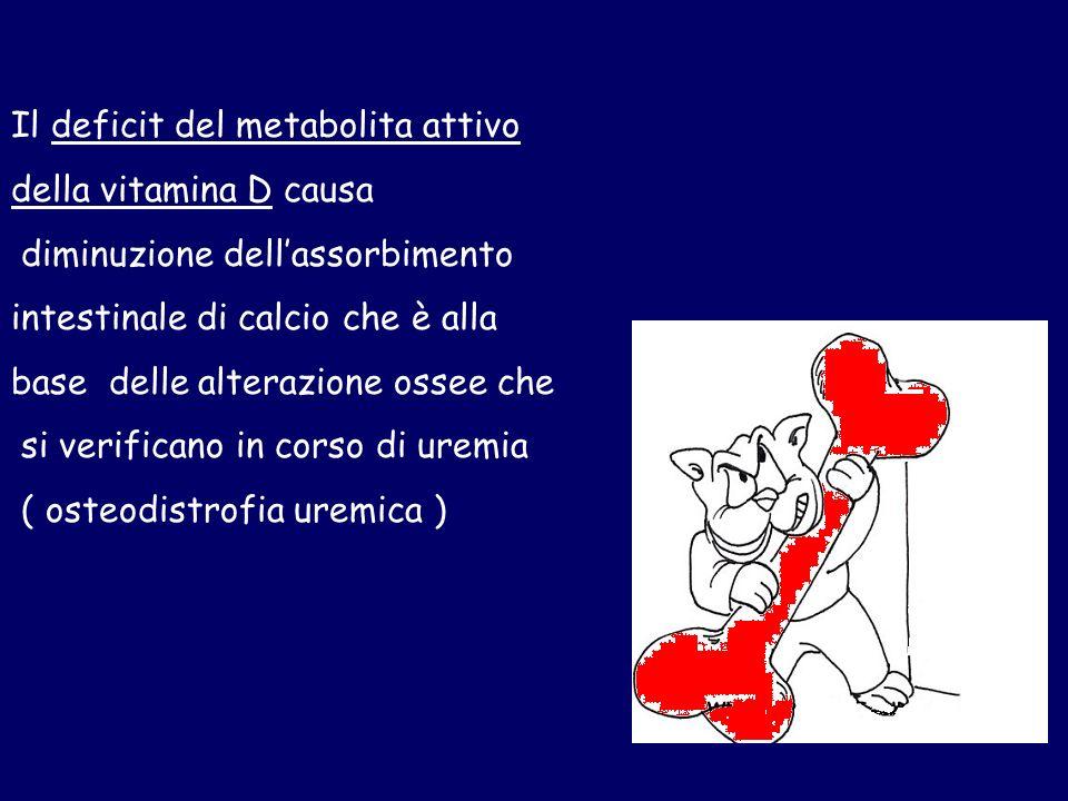 Il deficit del metabolita attivo della vitamina D causa diminuzione dellassorbimento intestinale di calcio che è alla base delle alterazione ossee che si verificano in corso di uremia ( osteodistrofia uremica )