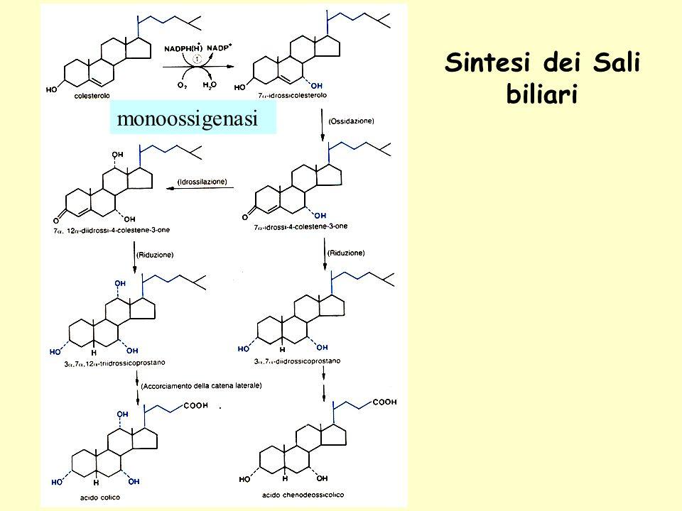 Sintesi dei Sali biliari monoossigenasi