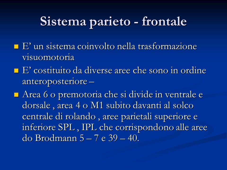 Sistema parieto - frontale E un sistema coinvolto nella trasformazione visuomotoria E un sistema coinvolto nella trasformazione visuomotoria E costitu