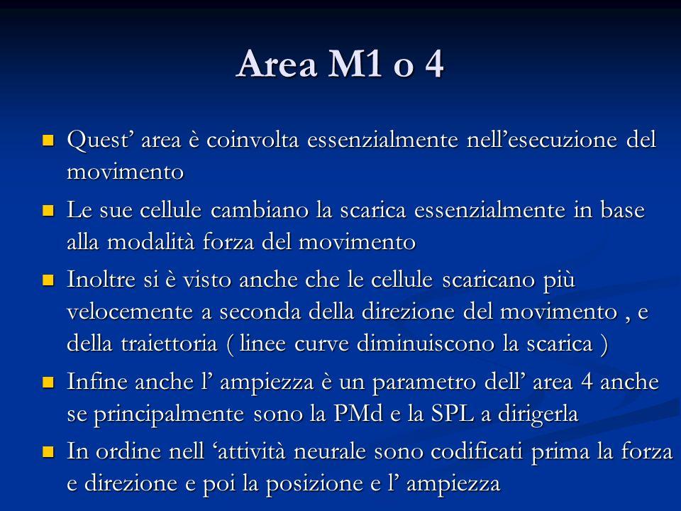Area M1 o 4 Quest area è coinvolta essenzialmente nellesecuzione del movimento Quest area è coinvolta essenzialmente nellesecuzione del movimento Le s