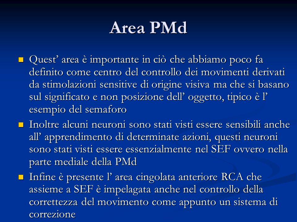 Area PMd Quest area è importante in ciò che abbiamo poco fa definito come centro del controllo dei movimenti derivati da stimolazioni sensitive di ori