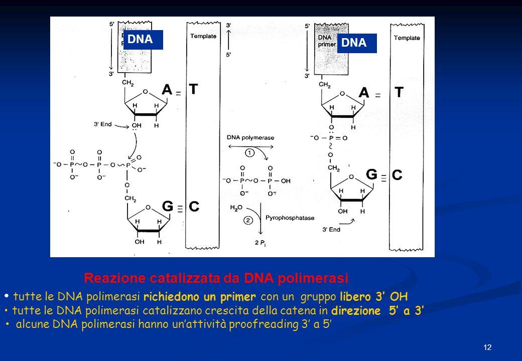 Reazione catalizzata da DNA polimerasi tutte le DNA polimerasi richiedono un primer con un gruppo libero 3 OH tutte le DNA polimerasi catalizzano cres