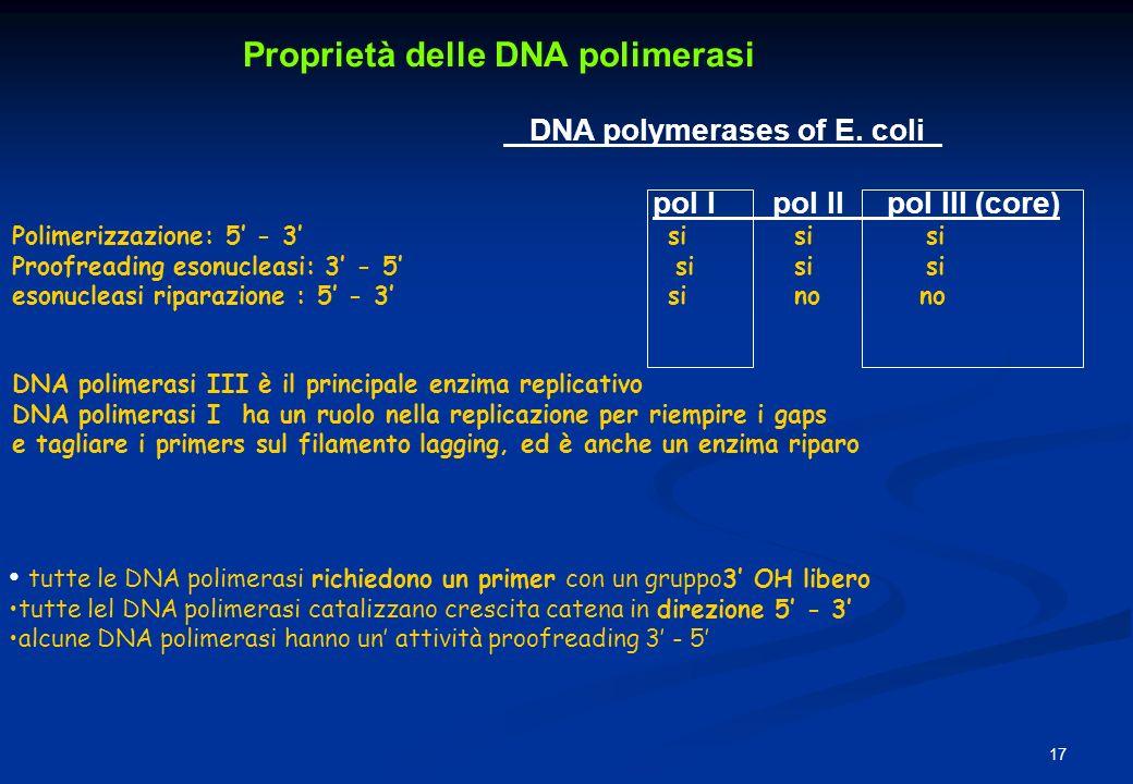 Proprietà delle DNA polimerasi DNA polymerases of E. coli_ pol I pol II pol III (core) Polimerizzazione: 5 - 3 si si si Proofreading esonucleasi: 3 -