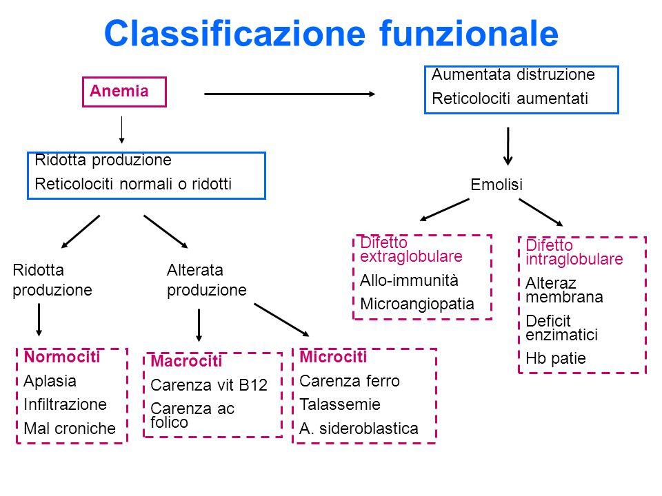 Classificazione funzionale Anemia Ridotta produzione Reticolociti normali o ridotti Ridotta produzione Alterata produzione Normociti Aplasia Infiltraz