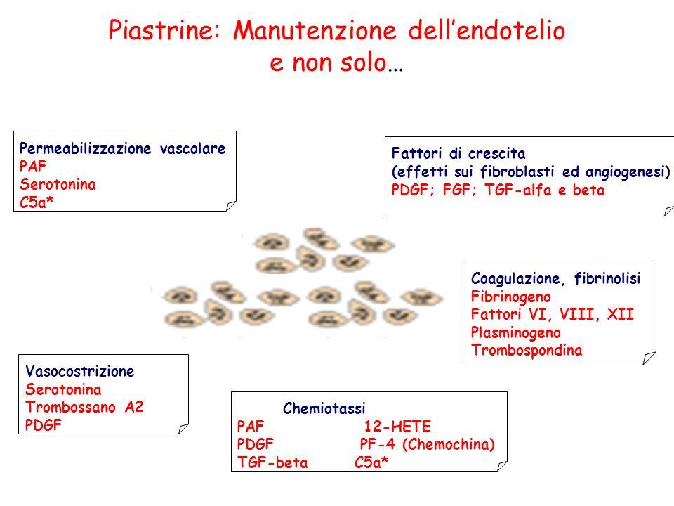 Permeabilizzazione vascolare PAF Serotonina C5a* Vasocostrizione Serotonina Trombossano A2 PDGF Chemiotassi PAF 12-HETE PDGF PF-4 (Chemochina) TGF-beta C5a* Fattori di crescita (effetti sui fibroblasti ed angiogenesi) PDGF; FGF; TGF-alfa e beta Coagulazione, fibrinolisi Fibrinogeno Fattori VI, VIII, XII Plasminogeno Trombospondina Piastrine: Manutenzione dellendotelio e non solo…