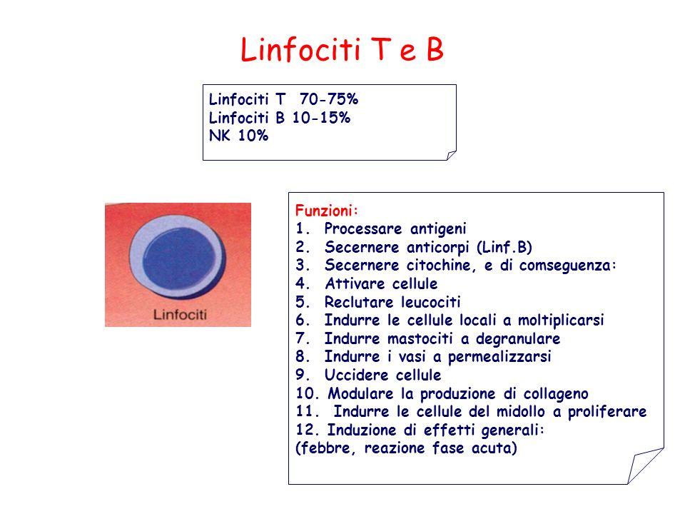 Linfociti T e B Funzioni: 1. Processare antigeni 2. Secernere anticorpi (Linf.B) 3. Secernere citochine, e di comseguenza: 4. Attivare cellule 5. Recl