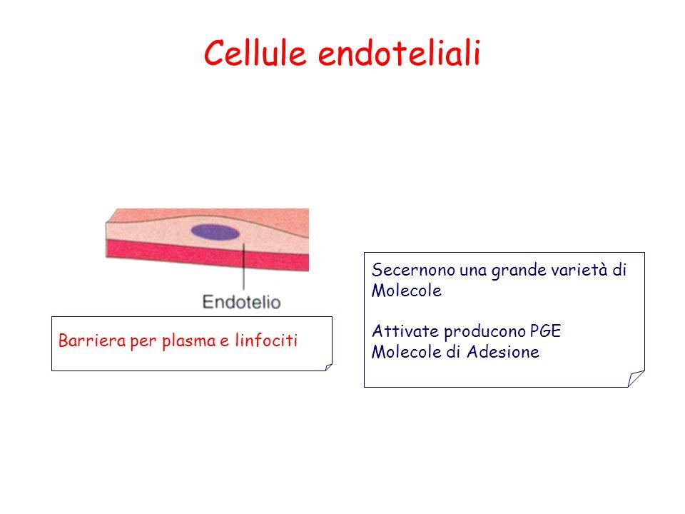 Cellule endoteliali Secernono una grande varietà di Molecole Attivate producono PGE Molecole di Adesione Barriera per plasma e linfociti