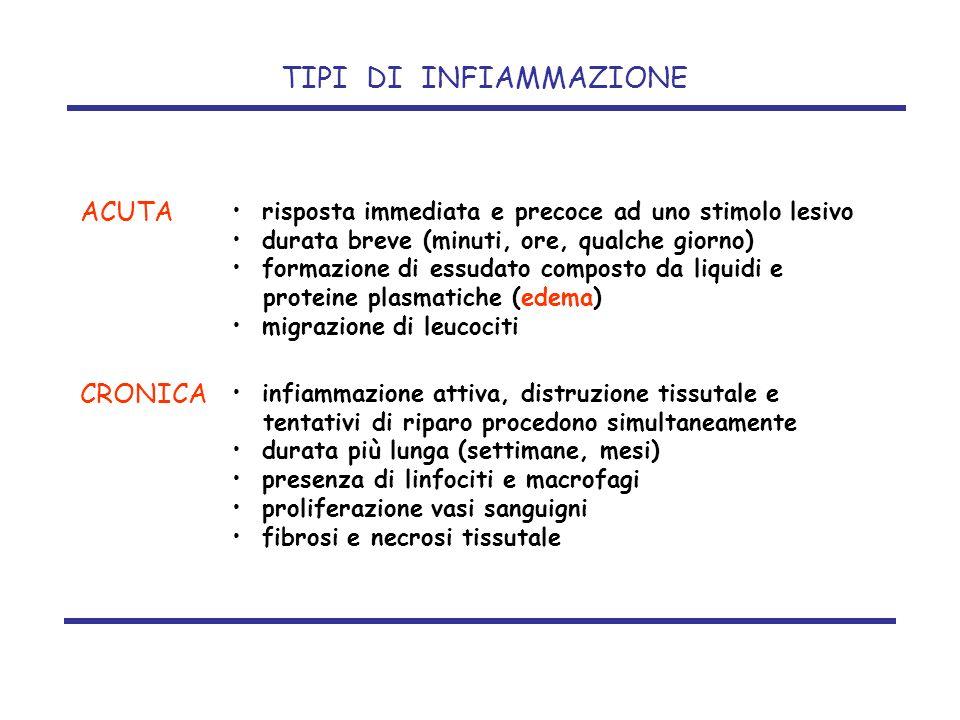infiammazione attiva, distruzione tissutale e tentativi di riparo procedono simultaneamente durata più lunga (settimane, mesi) presenza di linfociti e