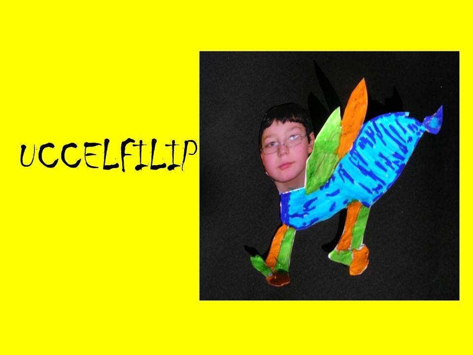 UCCELFILIP