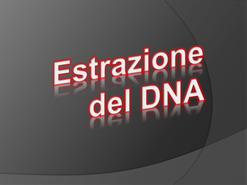 L acido desossiribonucleico o deossiribonucleico (DNA) è un acido nucleico che contiene le informazioni genetiche necessarie alla biosintesi di RNA (polimero organico) e proteine, molecole indispensabili per lo sviluppo ed il corretto funzionamento della maggior parte degli organismi viventi.